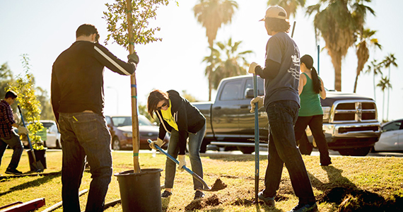 How small clubs make a big impact with trees – By Rotarian Laura Higgs